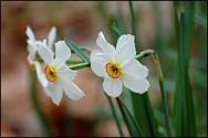 Naperville Spring